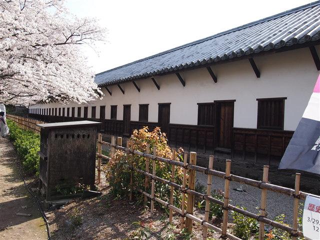 第5回 福岡城さくらまつり桜19