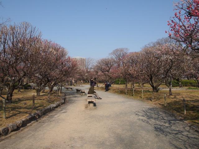 福岡城梅の花2014下8