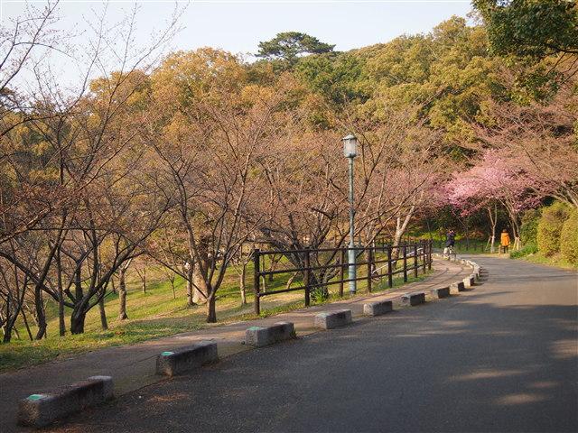 西公園桜2014-9