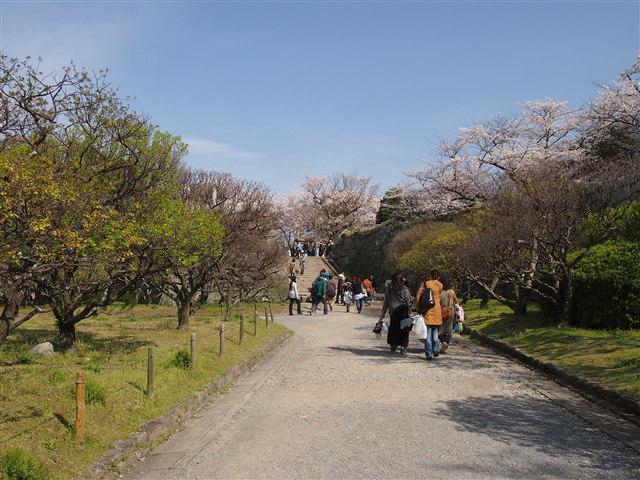 第5回 福岡城さくらまつり桜25