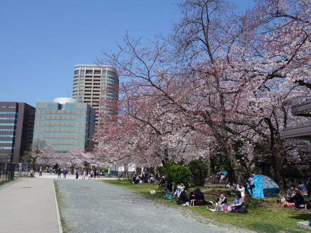 福岡城さくらまつり2015-10