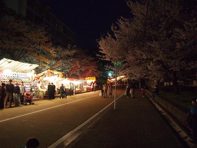 西公園桜2014-21