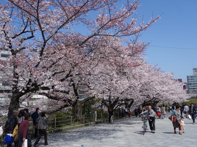 福岡城さくらまつり2015-6