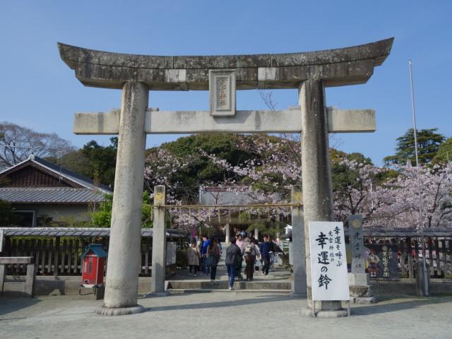 西公園桜2015光雲神社1