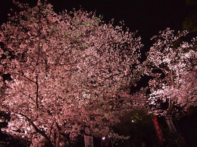 西公園桜2014-26