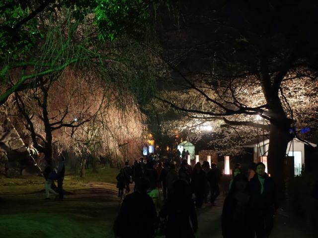 福岡城さくらまつり2015(夜桜)桜3