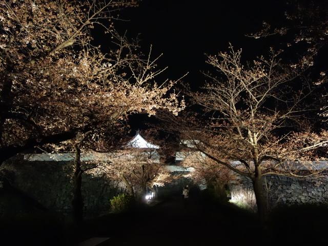 第7回 福岡城さくらまつり夜桜様子10