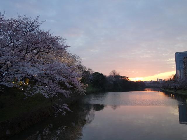 福岡城さくらまつり2015(夜桜)上之橋3