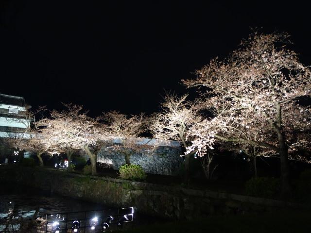 第7回 福岡城さくらまつり夜桜様子9