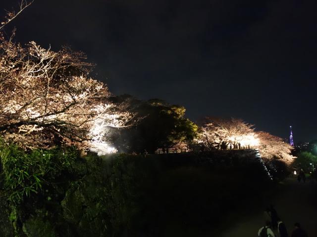 福岡城さくらまつり2015(夜桜)桜2